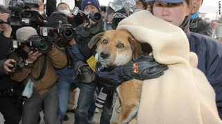 t1larg.japan.dog.rescue.jpg